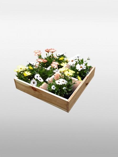 """Anzucht Set """"Beauty"""" natur 38x38x8cm Pflanzkasten Blumenkasten Anzuchtbox"""
