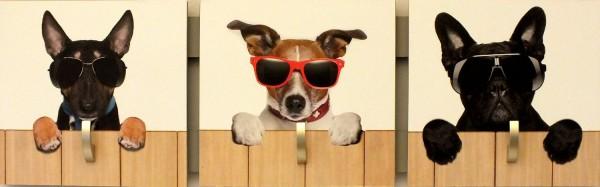 "Garderobe ""Sunglasses"", Hakenleiste, Garderobenleiste, Kleiderhaken, creme, 16x50x5cm"