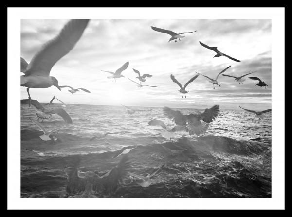 "Spiegelprofi 73704004 Gerahmtes Bild LORNA Gerahmtes ""Schwarm"" 30 x 40cm, schwarz/weiß, Wandbild, Bild"
