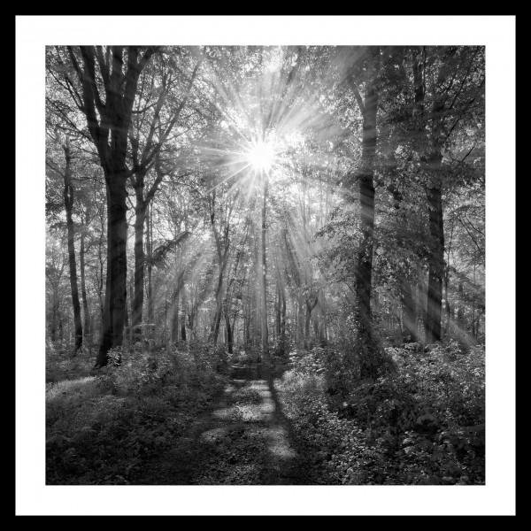 """Spiegelprofi 73774007 Gerahmtes Bild DANJA Gerahmtes Bild """"Wanderweg"""" 35x35cm, schwarz/weiß, Wandbild"""