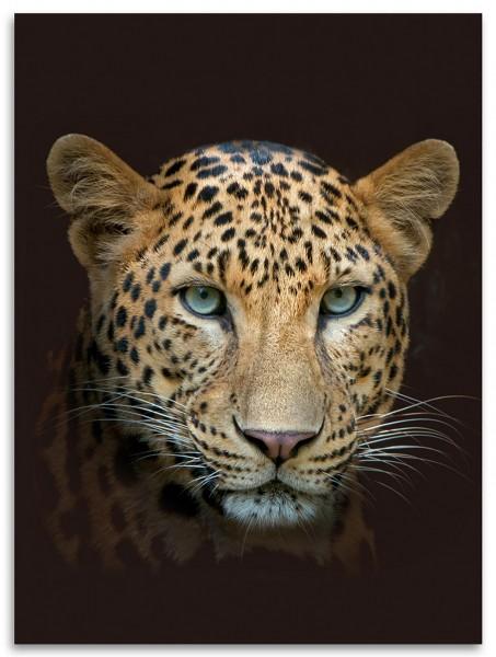 """Wohndecke """"Animal"""" 150x200cm, 3 verschiedene Motive: Leopard, Pfau, Pferd Kuscheldecke"""