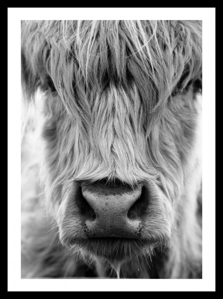 "Spiegelprofi 73584004 Gerahmtes Bild LORNA Gerahmtes Bild ""Portrait Büffel"" 30 x 40cm, schwarz/weiß, Wandbild, Bild"